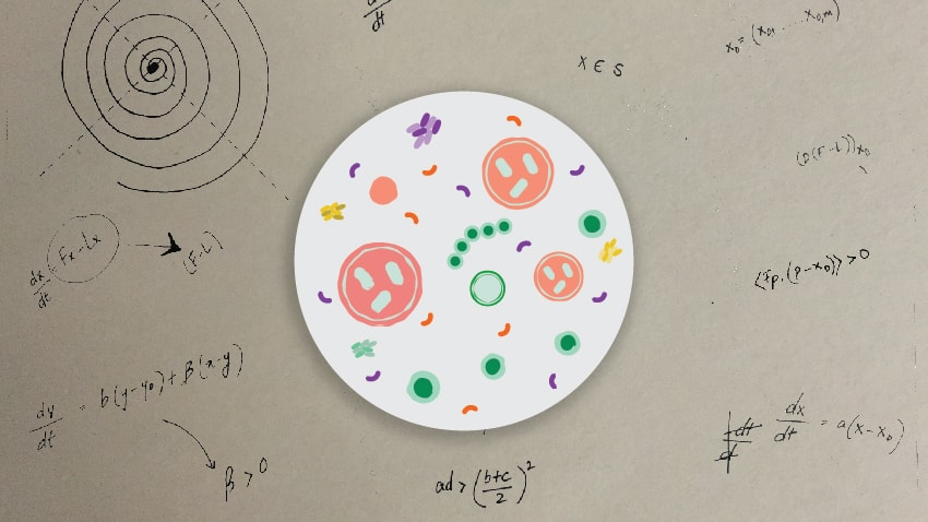 Can Math Help Explain Our Bodies — and Our Diseases?