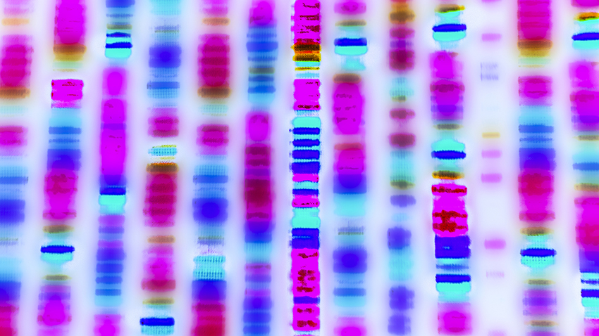 Researchers Show How Specific Gene >> Gene Discovery Shows Effects Of Impaired Protein Synthesis