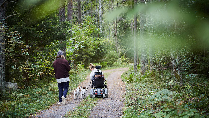 Woman, girl in a wheelchair with two white and brown dogs on a narrow wooded road