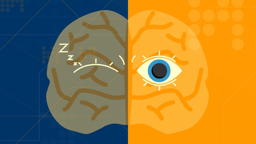 Brain split in half, with half of it asleep and half awake.