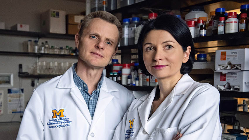 Tomasz Cierpicki, PhD, and Jolanta Grembecka, PhD, in the lab.<br /><strong>Photo by</strong> Leisa Thompson