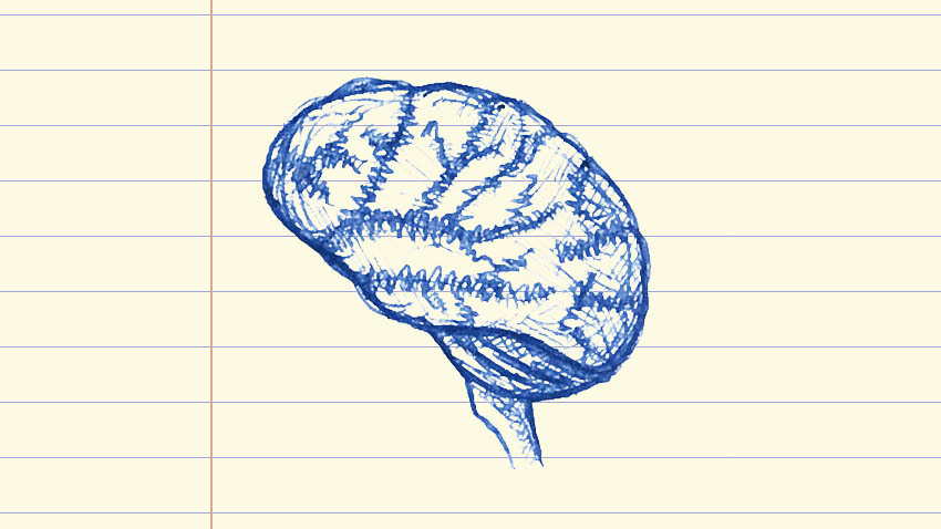 drawing of a brain in blue ink on lined note paper