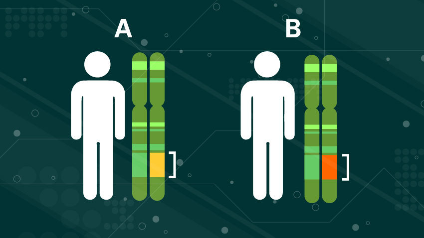 white figured person standing next to a polygenetic risk score labeled A in green with a yellow dot and another person standing next to one labeled b with a red dot.