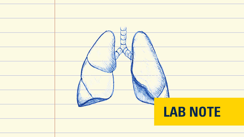 drawing of lungs in blue ink on lined paper