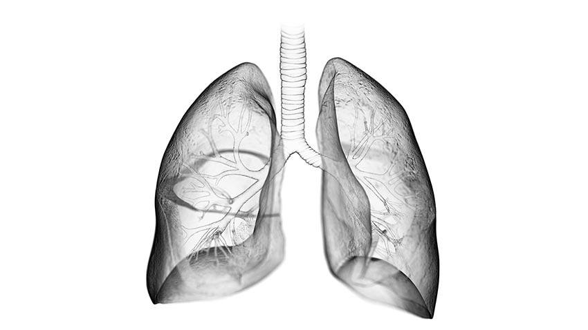 grey transparent lungs seeing brachial branching
