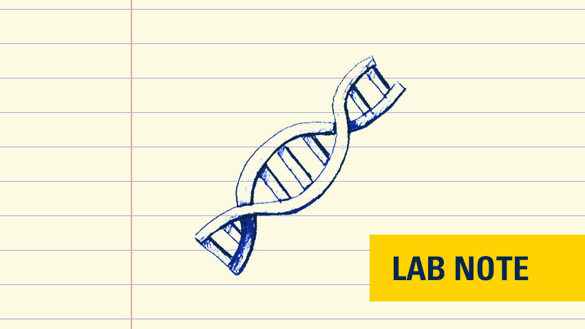 drawing on lined paper of genetic strand in blue with yellow badge with blue font saying lab note