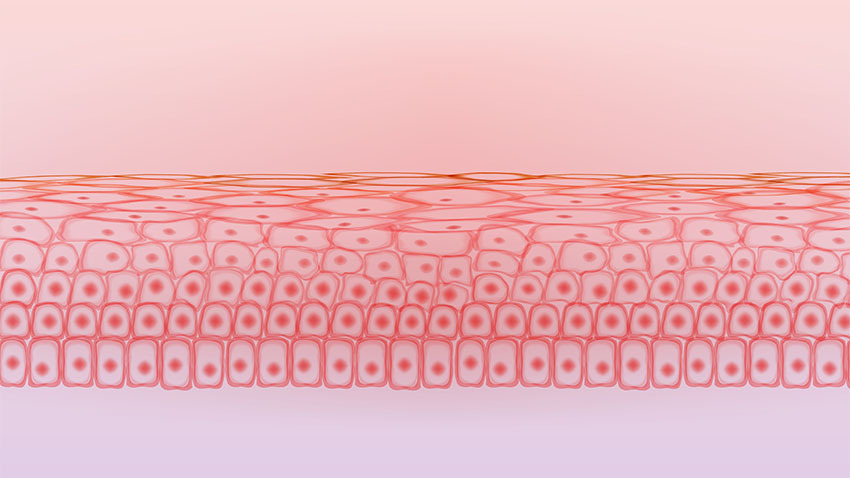 graphic of pink orange skin tissue cell