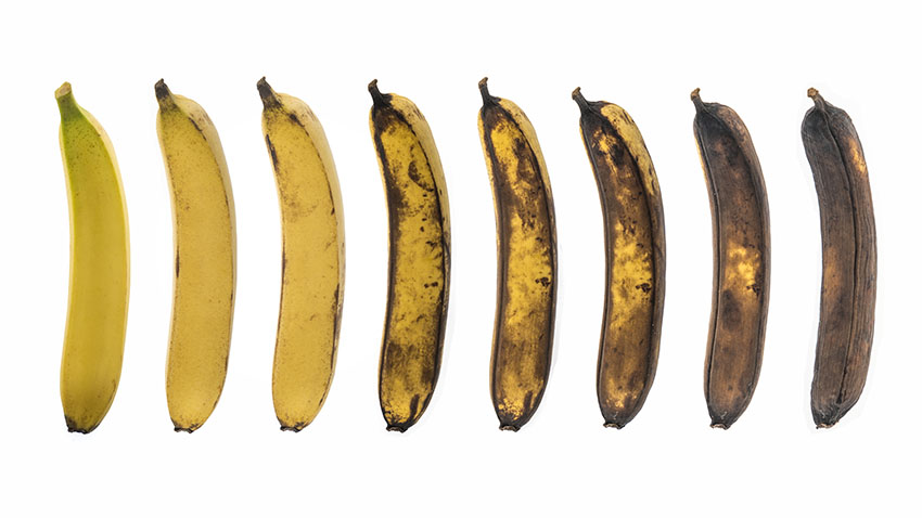 Bananas aging from yellow to brown