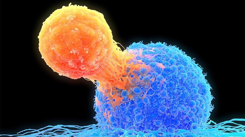 T-cell attaching to cancer cell