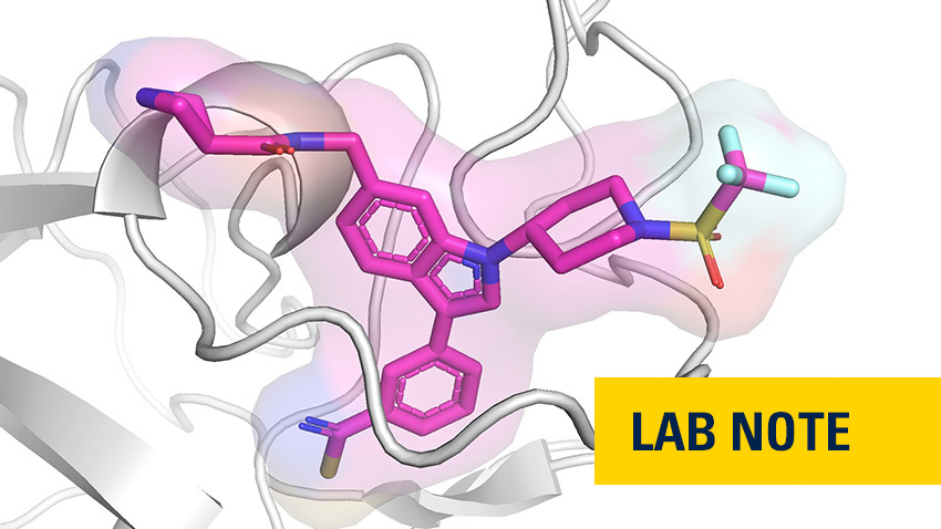 An X-ray crystallography image showing an ASH1L inhibitor developed at U-M in complex with the protein.