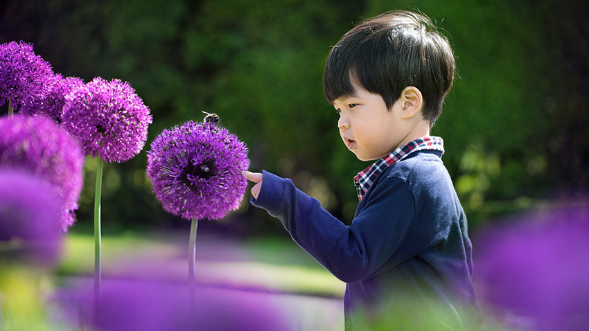 toddler boy touching purple flower with bee on it in field
