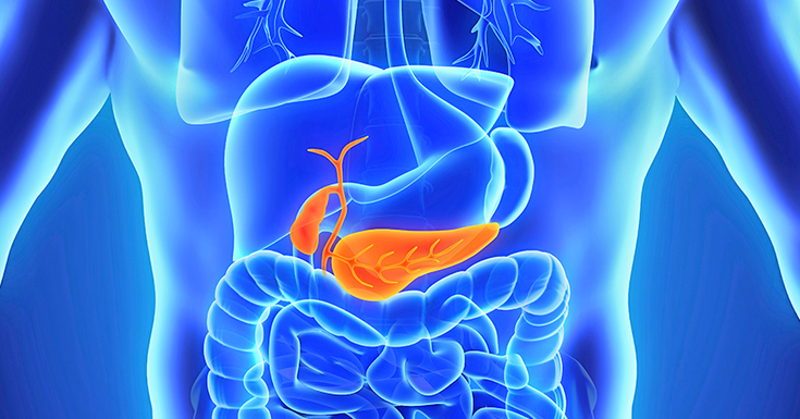 Orange pancreas shown inside a blue body outline