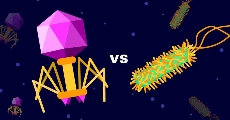 Bacteriaphage vs bacterium