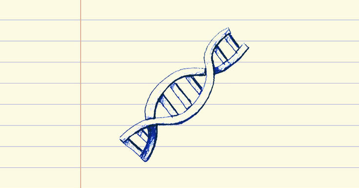Drawing of a gene