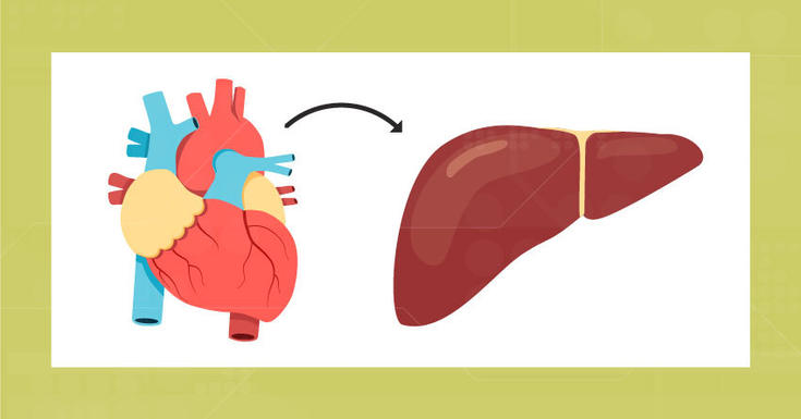 drawing of heart and an arrow pointing to a drawing of a kidney