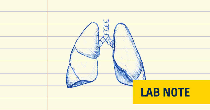 lungs drawn in blue ink with lab note written on bottom right with yellow background and blue text
